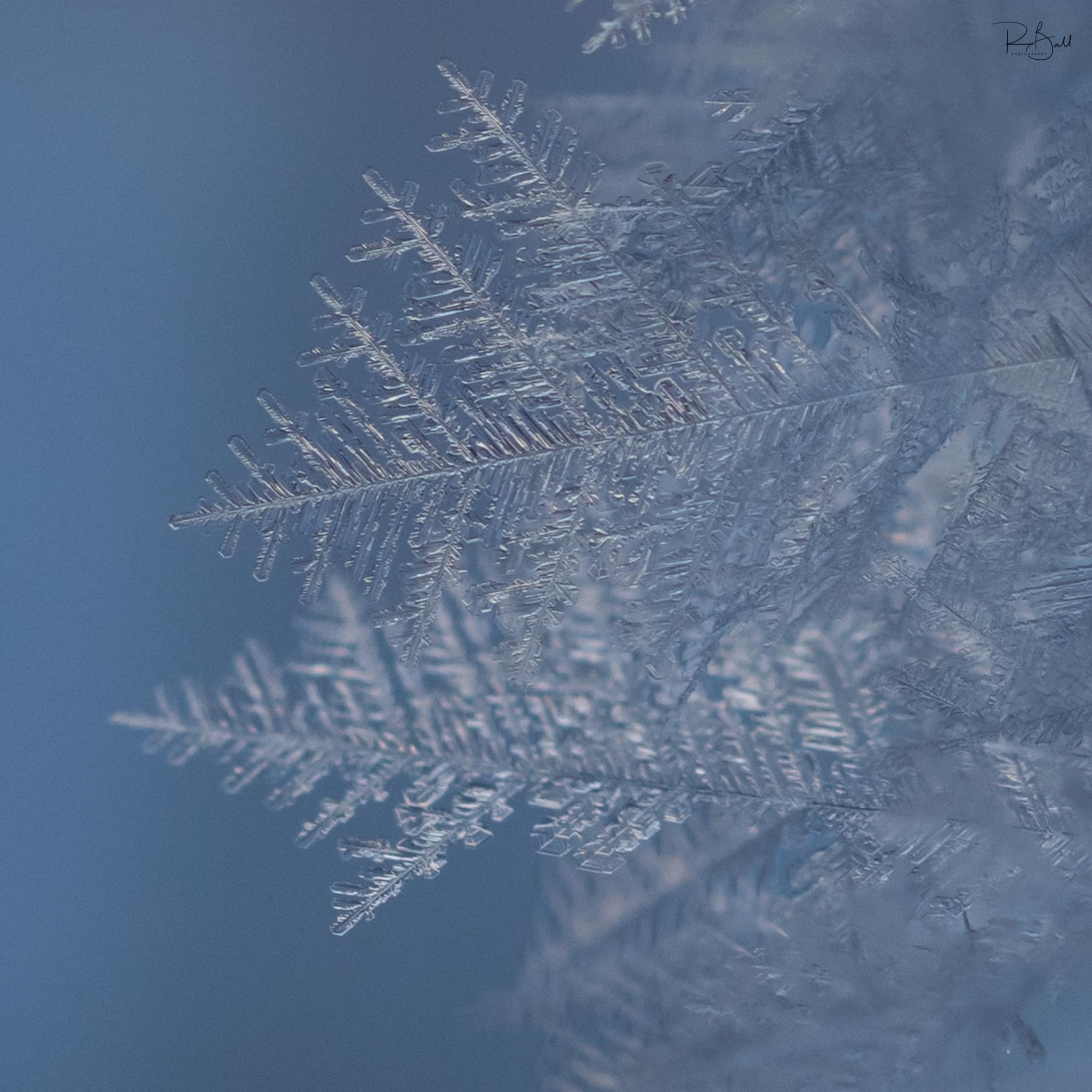 April Frost-2